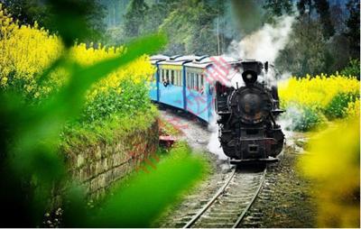 花海观光小火车