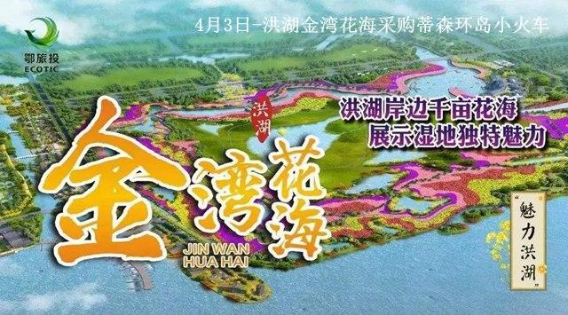 鄂旅投-洪湖金湾花海